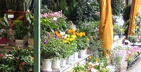 Blumenhandlung Schnittblumen